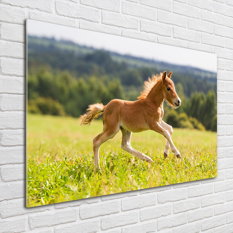 Acrylglas-Bild Wandbilder Druck 100x70 Deko Tiere Fohlen im Galopp