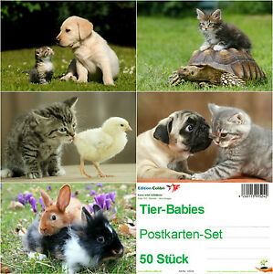 50-Postkarten-TIER-BABIES-5-Motive-a-10-St-Hund-Katze-Schildkroete-Kaninchen