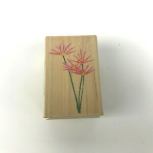 Real-Wild-Aster-C2830-Rubber-Stamp-BY-Hero-Arts-2-034-x-1-25-034