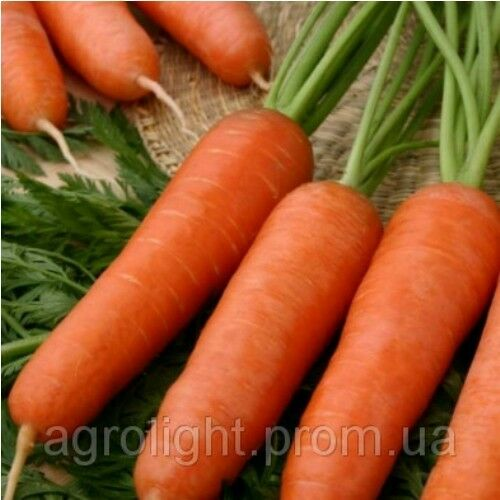 """Netherlands Seeds of Carrot Carini 1 g TM /""""Bejo Zaden/"""" Farmer/'s dream"""