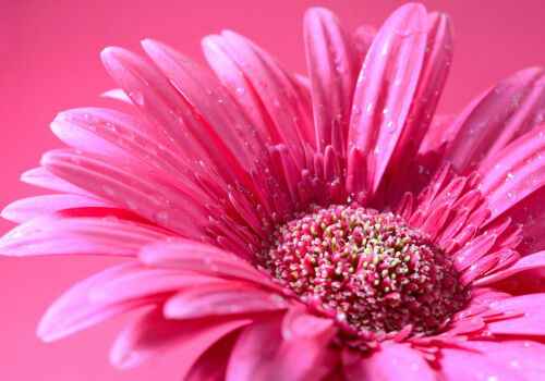 Glass Splashback Kitchen Tile Cooker Panel ANY SIZE Macro Pink Flower Zoom 0387