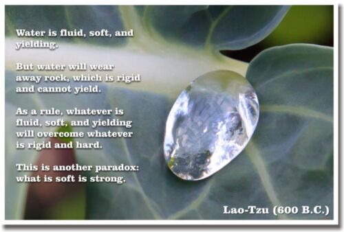 School Classroom Motivational POSTER What Is Soft Is Strong LaoTzu 600BC