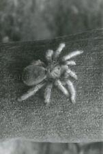 KINGDOM OF THE SPIDERS  1975 VINTAGE PHOTO ORIGINAL #7  SCI-FI  HORROR B-MOVIE