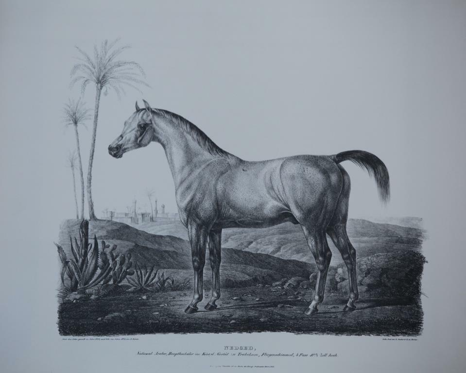 HORSE BREEDER-LITHOGRAPH-  NEDGED   NATIONAL-ARABE   - 20.21 x  24.15 inches