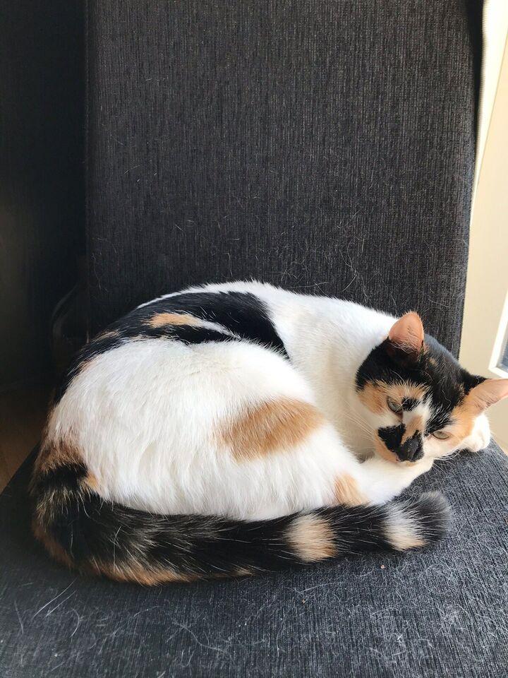 Flere killinger, Inde kat, 3 år