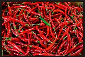 Pepper-Cayenne-Long-Red-Chili-Heirloom-Non-GMO-Seeds