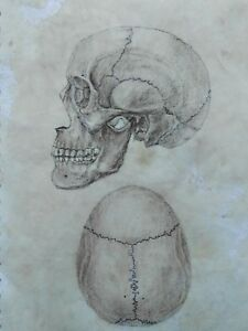 Original-Anatomy-Scull-Drawing-Antique-Art-Vintage-Look-Illustration-Human
