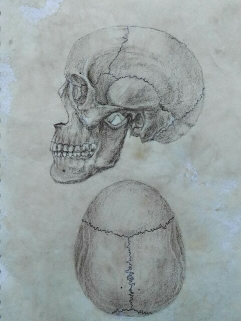 Original Anatomy Scull Drawing Antique Art Vintage Look Illustration Human