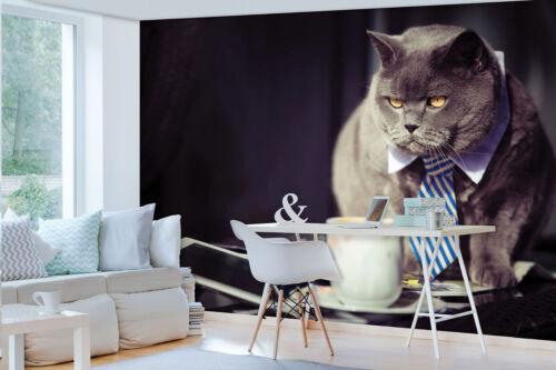 VLIES POSTER WANDBILD TAPETEN FOTOTAPETE POSTER Katze Tiere Krawatte 3FX10397VE