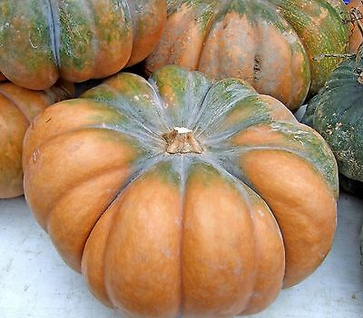 VEGETABLE  SQUASH MUSCADE DE PROVENCE  20 FINEST SEEDS