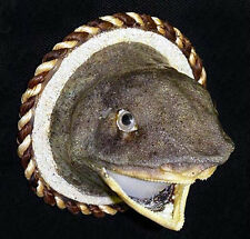 """Real Preserved Stuffed Reef Sand Shark Head Mount ~ On a 3"""" Wood Disk Magnet"""
