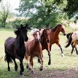 3tg reiturlaub halbpension Hôtel République Tchèque cavaliers vacances proche forêt bavaroise  </span>