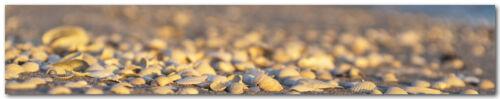 Küchenrückwand Muschel Strand Premium Hart-PVC 0,4 mm selbstklebend