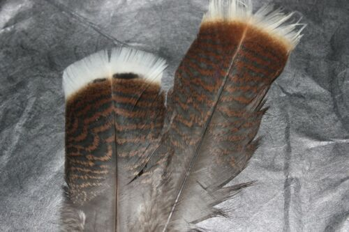 Fly Tying Turkey Tail feathers J8