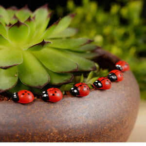 50PCS-Miniature-Fairy-Doll-House-Garden-Red-Beetle-Ladybug-Ornament-Craft-Decor
