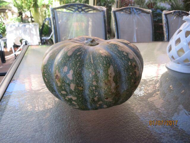 "12 Pumpkin Seeds ""Jap / Kent"" - Grow your own - Fresh is Best -FREE POSTAGE"