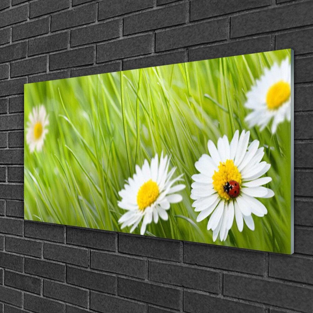 Tableau sur verre Image Impression 100x50 Nature Marguerite Herbe