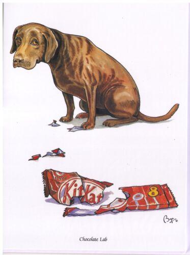 """Bryn Parry /""""CIOCCOLATO Labrador/"""" Cane greeting card /& BUSTA-vuoto all/' interno"""