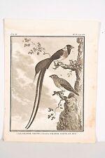 Histoire Naturelle Oiseaux Buffon v 1780 Baron-De Sève La Grande Veuve