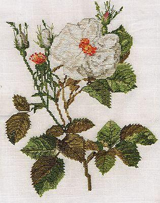 Iris Germanica counted cross stitch kit or chart 14s aida