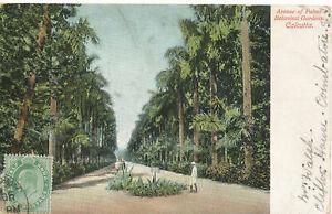 PC10098 Avenue De Palmiers Jardins botaniques. CALCUTTA. G. B. V. Ghoni