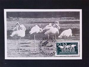 Capable Rda Mk 1956 552 Flamants Roses Flamingo Maximum Carte Carte Maximum Card Mc Cm C6422-afficher Le Titre D'origine