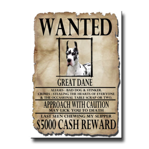 GREAT DANE Wanted Poster FRIDGE MAGNET No 2 Harlequin