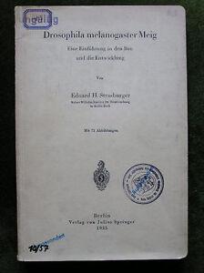 Drosophila melanogaster - Eine Einführung... (1935)!!! - Jena, Deutschland - Drosophila melanogaster - Eine Einführung... (1935)!!! - Jena, Deutschland