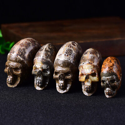 Natural Hand Carved Skull Natural Crystal Healing Gemstone/%Carving Specimen Nz