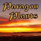paragonplants