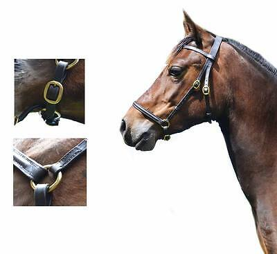 English Leather In Hand Show Slip No Bit Bridle Welsh Pony Cob Native Bit less
