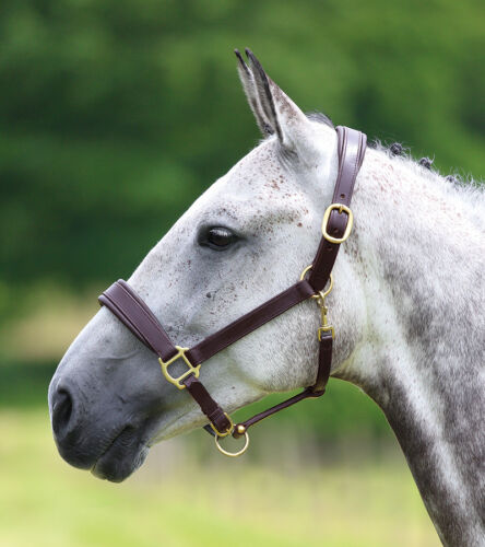 NEW Shires Blenheim Leather Padded Adjustable Travel Show Horse Pony Headcollar