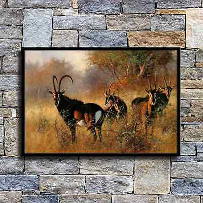 "16/""x24/""African Savannah Antelope  HD Canvas prints Painting Home Decor Wall art"