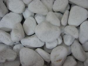 Dekokies orange Gartenkies Zierkies Gabionensteine 20-30 20 kg Glassteine