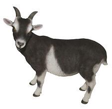 Vivid Arts - REAL LIFE FARM ANIMALS - Goat Real Life Goats