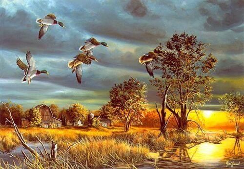 "Jim Hansel Morning Mallards Duck Print 13/"" x 9/"""