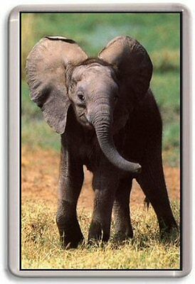 Baby Elephant Fridge Magnet Cute
