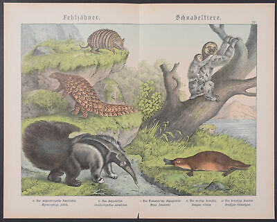 45-1886 Naturgelchicte Des Teirreichs Matching In Colour Giant Anteater Rapture Schubert Platypus