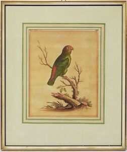 George-Edwards-Kupferstich-18-Jh-handkoloriert-Buettenp-Vogel-Papagei-42x36cm
