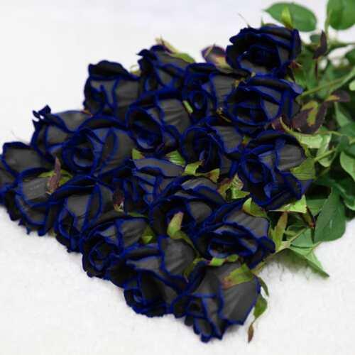 10 Stück Midnight Blue Rose Blumensamen seltene Gartenpflanze*