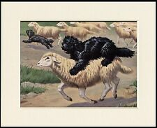 HUNGARIAN PULI AND SHEEP DOG PRINT MOUNTED READY TO FRAME