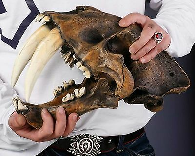 Handmade Resin Replica 1:1 Saber-toothed Tiger Skull Model Anatomy With Stand