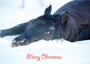 Christmas-Cards-Equestrian-Horse-Pony-Unique-Cards-10-Pack-A5-Size