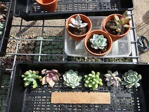 Wedding-gift-succulent-cuttings-4-great-types-shapes-amp-contrast-60-plus-60-pots