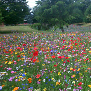 100-Wild-Flower-Seed-Mix-Annual-Meadow-Plants-Attracts-Bees-amp-Butterfly