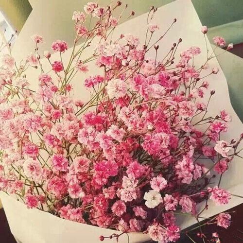 BE/_ HO/_ 30Pcs Colorful Babys Breath Gypsophila Seeds Flower Garden Bonsai Plant