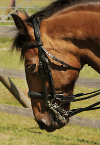 Heritage-Padded-English-Leather-Comfort-Double-Bridle-All-Sizes-Dressage