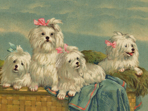 MALTESE CHARMING DOG GREETINGS NOTE CARD FOUR BEAUTIFUL DOGS IN BASKET
