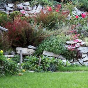 Détails sur Fleur - Rock Jardin / Jardin de Rocaille Vivace Mélange - 1g de  Graines
