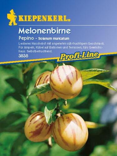 Kiepenkerl Melonenbirne 3838 *Pepino* Naschobst selbstbefruchtend